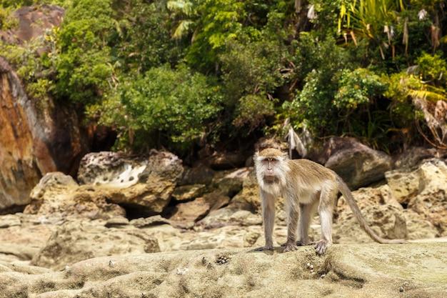 猿は岩の上に立つ
