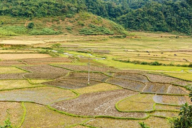 収穫後の田んぼ、田植えのための畑