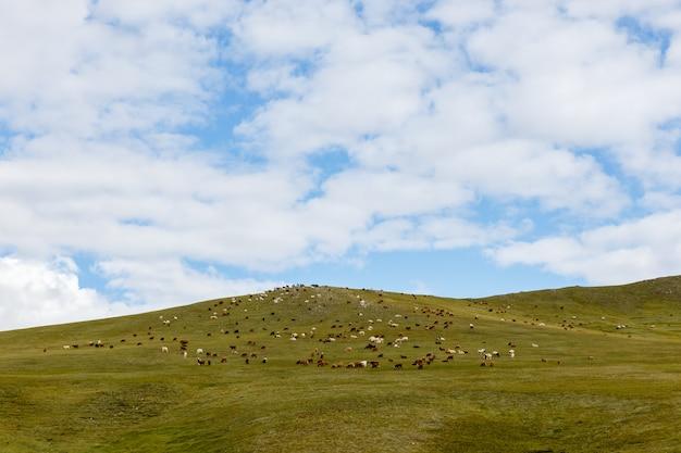 モンゴルの草原で羊や山羊の群れが放牧