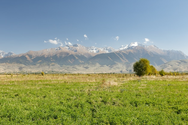 イシククル湖近くの雪山を背景にした緑の牧草地