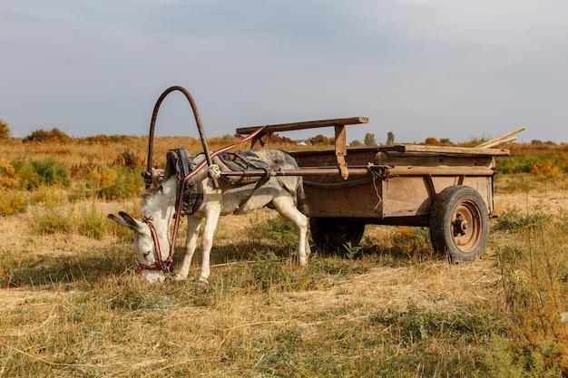 Осел, запряженный в железную телегу, стоит на лугу