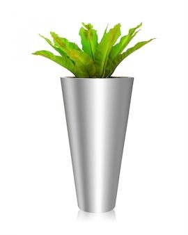 木の鉢が白い背景で隔離。オフィスや家の植物のためのシダの花瓶の装飾。
