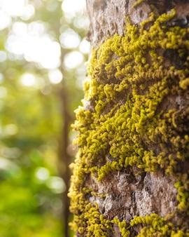 コケの自然の背景で古い木の樹皮に覆われて