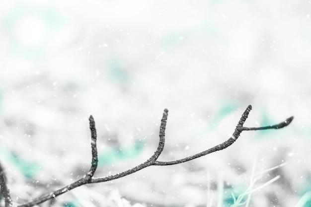 雪の背景と松の枝。クリスマスの背景と空白スペース。