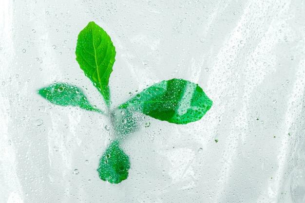 Деревья, растущие на рассаду в полиэтиленовом пакете с каплями воды и фон росы