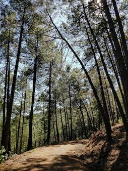春には、スペイン中部の山の松林の中の未舗装の道路。