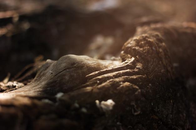 美しい木の根と秋の森の中の日差し。
