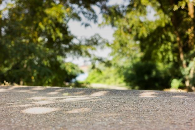 Зеленая лесная дорога