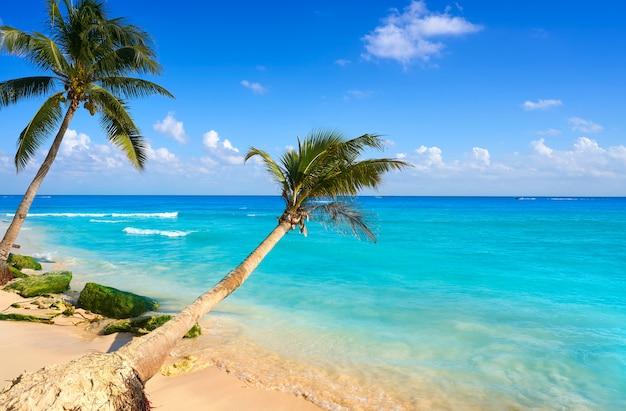 Плайя дель кармен пляж пальмы мексика