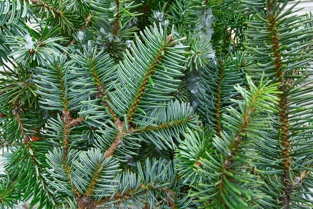 Рождество настоящая ель оставляет макрос