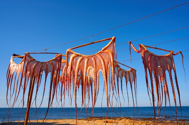 地中海のスペインで乾燥タコ