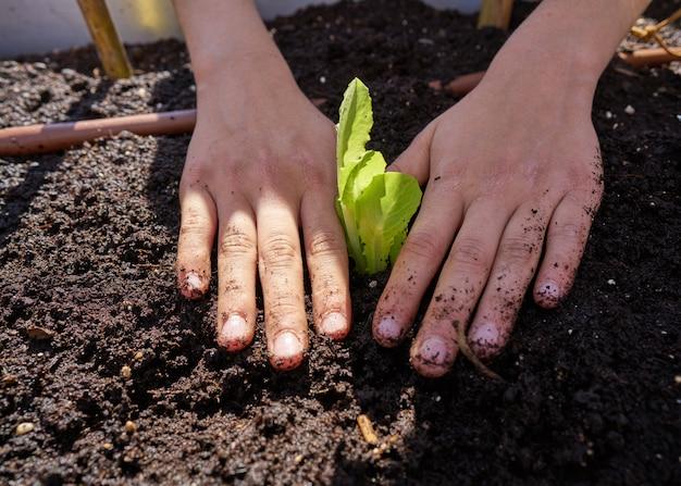 果樹園でレタスを植える手をグリルします。
