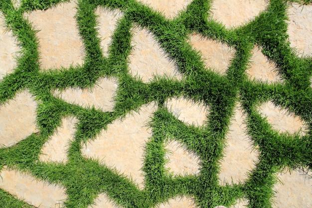 緑の芝生の庭のテクスチャの石の道