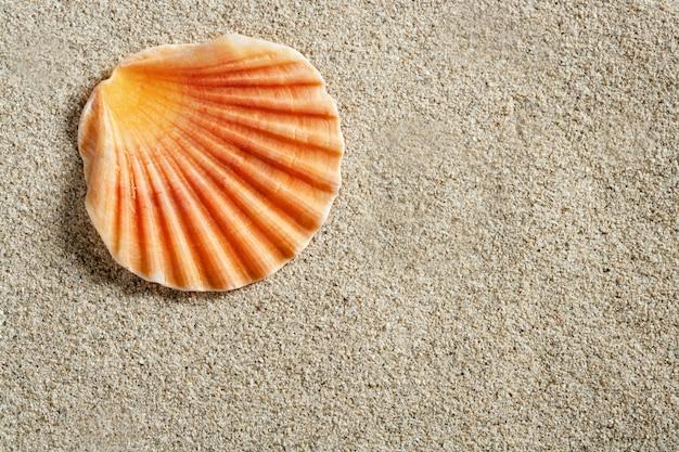 明確な白いカリブ海の砂の上のハマグリシェルマクロ