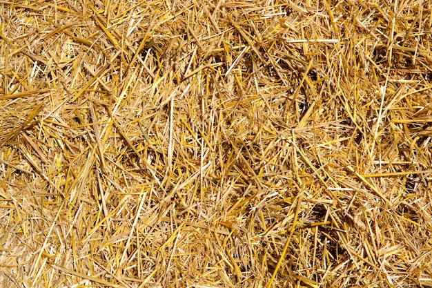 収穫直後の穀物のわら