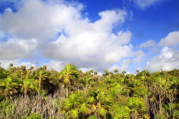 チュームヤシの木のトゥルムマヤリビエラメキシコ