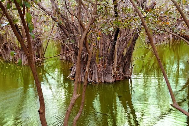 メキシコのアグアダセノーテマヤのリビエラジャングル