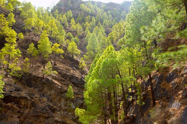 Гран-канария канарские сосновые горы
