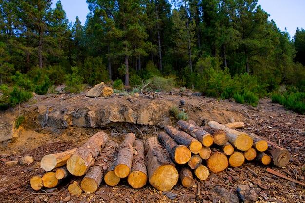 テネリフェ島の木材産業で伐採された松の木