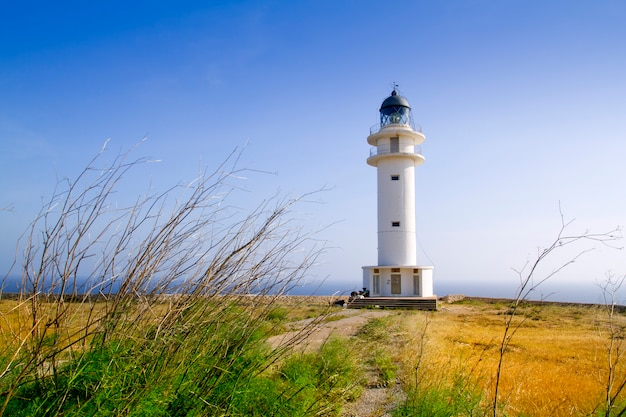 野蛮人ベルベリア岬灯台フォルメンテラ島草原