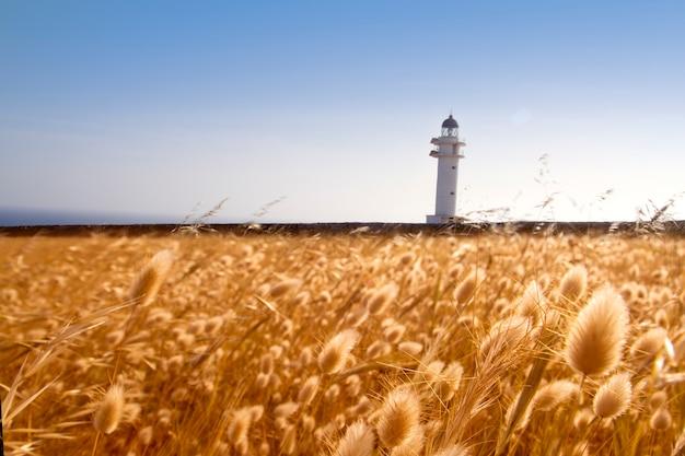 野蛮岬灯台フォルメンテラ島黄金の牧草地