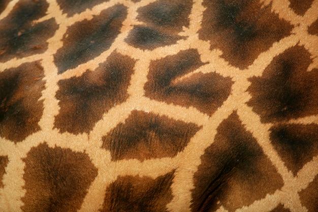 キリン肌パターンマクロの背景