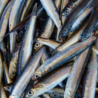 Анчоусы свежей рыбы на рыбном рынке