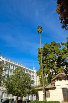 Валенсия, партер парк, высокая пальма, испания