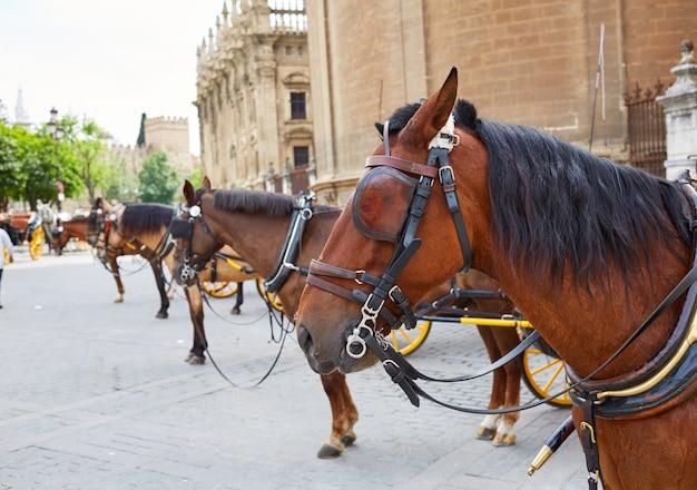 Севильские конные повозки в соборе севильи