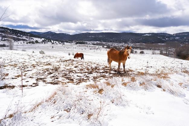 Вирхен-де-ла-вега снежная деревня лошадь в теруэль, испания