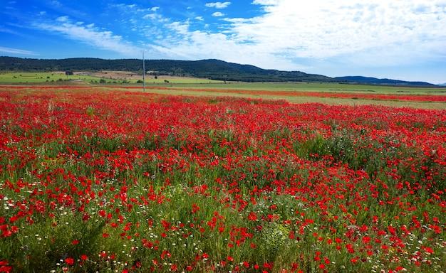春の牧草地カミノサンティアゴレバンテ