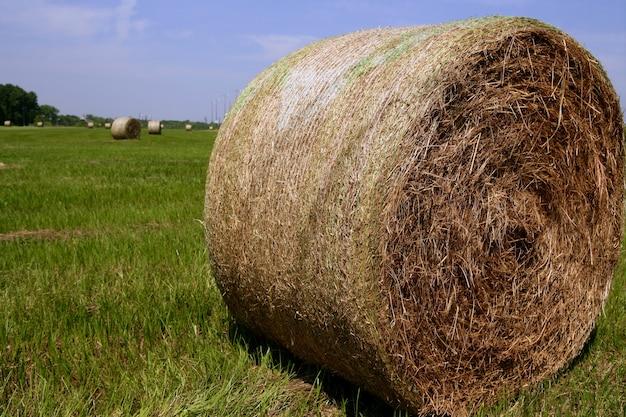 アメリカの田舎で黄金のわら干し草の俵