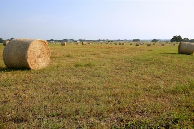 晴れた日にアメリカの田舎で黄金のわら干し草の俵