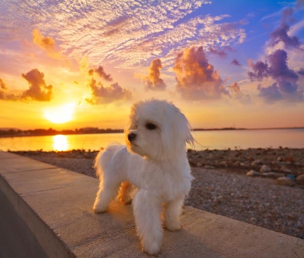 アリカンテのラスロタスビーチからデニア夕日