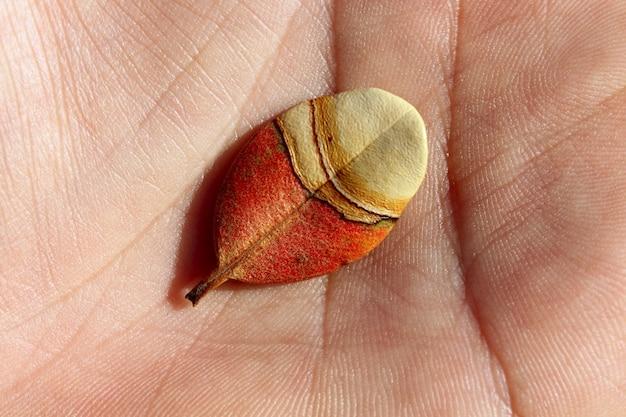 人間の手のマクロで秋の葉