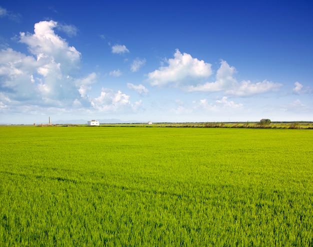 スペインバレンシアの緑の芝生の田んぼ
