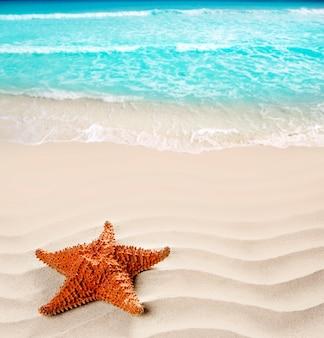 カリブ海ビーチヒトデ波状白い砂夏