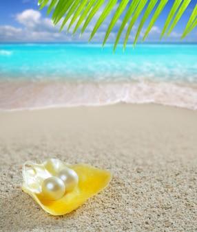 カリブ海真珠のシェル白砂のビーチの熱帯