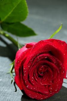 Макрос красной розы на темном черном дереве
