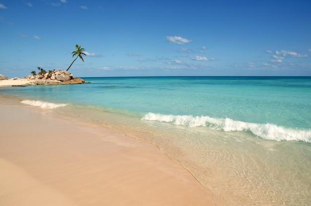 トゥルムマヤリビエラ熱帯のビーチのヤシの木