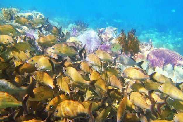 Коралловый риф карибская рыба майя ривьера