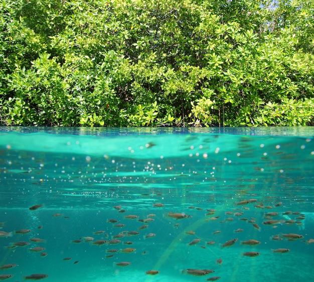 水辺の本当の生態系をマングローブ