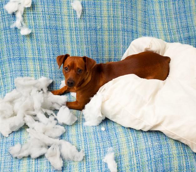 枕をかむ後いたずらな遊び心のある子犬犬