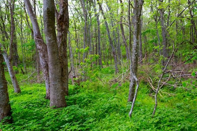 テキサス屋外のジャングル森林公園