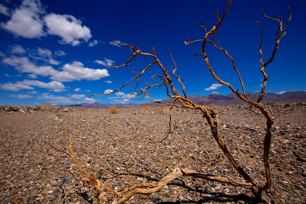 デスバレー国立公園カリフォルニア乾燥枝