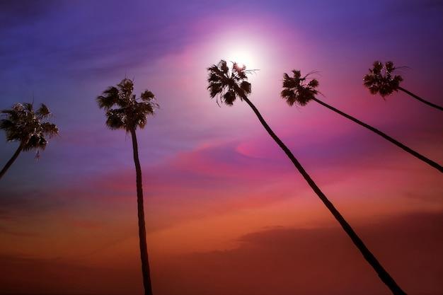 カラフルな空とカリフォルニアのヤシの木の夕日