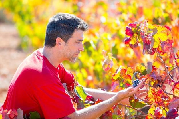 地中海のブドウ畑の農家のブドウの葉をチェック