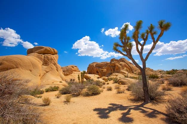 ジョシュアツリー国立公園ジャンボロックスユッカバレー砂漠カリフォルニア