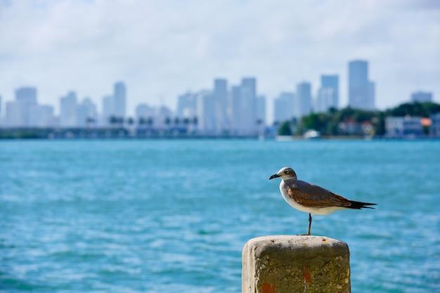 Майами, центр города туманный горизонт майами-бич