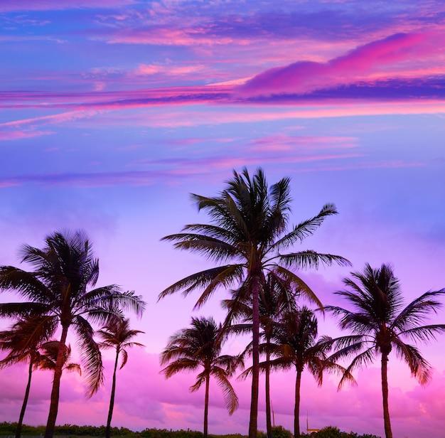 マイアミビーチサウスビーチサンセットヤシの木フロリダ